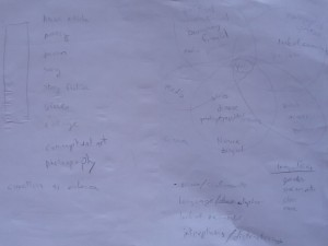 early sketches and notes